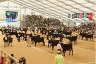 全国和牛能力共進会 宮城大会